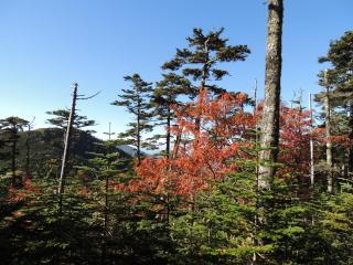 2012h241010_yume2.jpg