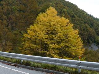 2012h241020_yume5.jpg