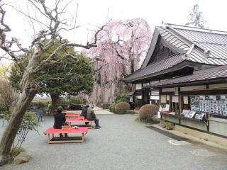 itozakura2016h280403_1.jpg