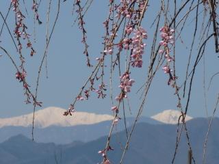 jiunji20120412-4.jpg