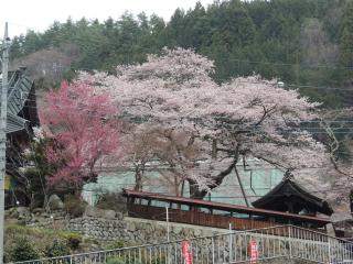 kichijouji20140414_1.jpg