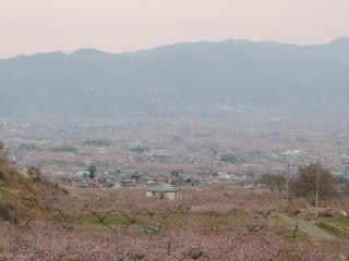 momo20140413_hanamidai2.jpg