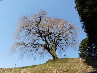 okkazuma20120405-1.jpg