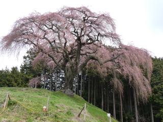 okkazuma2012h240416-2.jpg