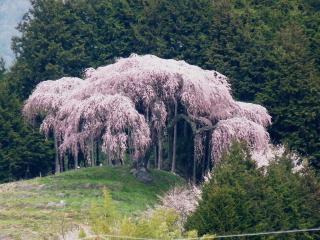 okkazuma2012h240417-1.jpg