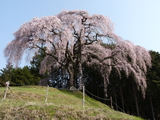 okkazuma2018h300402-3.jpg
