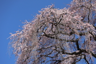 okkazuma2019h310406-7.jpg