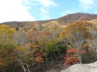 r441yanagisawa-2.jpg