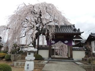 syuurinji2013h250328_1.jpg