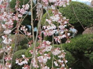 syuurinji2015h270329-1.jpg