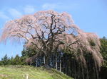 2009h21-0403-okkazuma-1.jpg