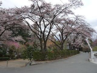 20100401-hokoji-1.jpg