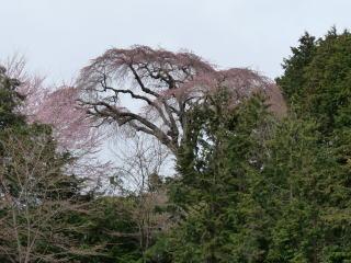 20100401-okkazuma-1.jpg
