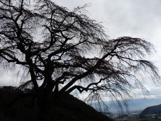 20100401-okkazuma-4.jpg