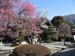 hokoji-hana20070224-1.jpg