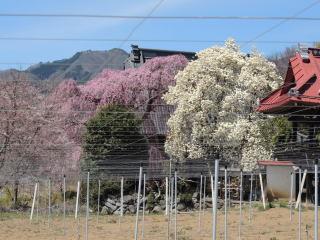 mansyouji2012015h270402-1.jpg