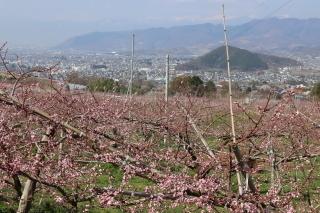 momo-nakahagihara2020r0404-320-1.jpg