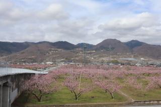 momo-peach-line2020r20328-320-.jpg