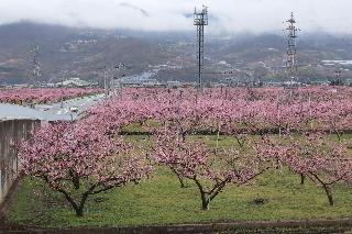 momo-peach-line2020r20401-320-2.jpg