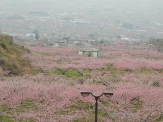 momo20140419_2kanazawa.jpg