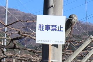momo2019h310404yajirushi-3.jpg