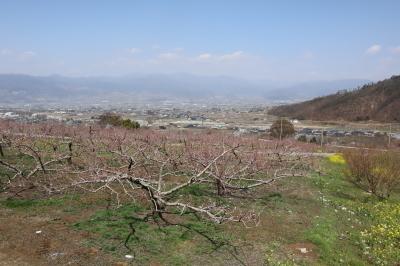 mtx-2021r30326-kurokoma-1.jpg