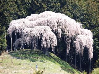 okkazuma2014h2604011_7.jpg