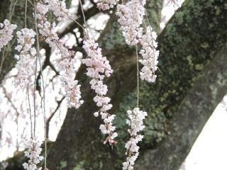okkazuma2015h270405_2.jpg