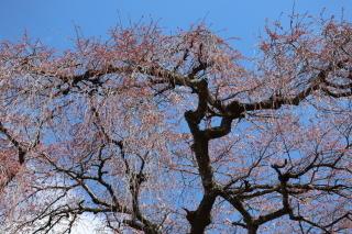 okkazuma2019h310403-6.jpg