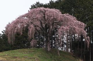 okkazuma2020r2_0328-1.jpg