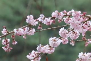 okkazuma2020r2_0328-6.jpg