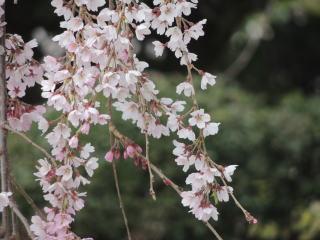 syuurinji2016h280403-5.jpg