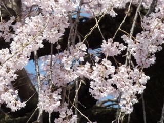 syuurinji2018h300331-4.jpg