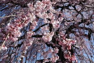syuurinji2020r2_0325-320-5.jpg