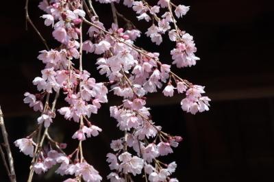 syuurinji2021r30322-4.jpg