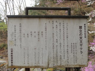 tenouzakura2016h280421-5.jpg